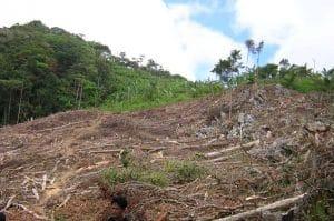 Forest clear-felled illegally © L. Rosenbaum