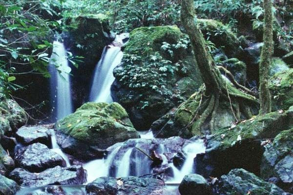 The forest retains water, providing a steady supply and protection from flooding after rainstorms ©  I. Frank