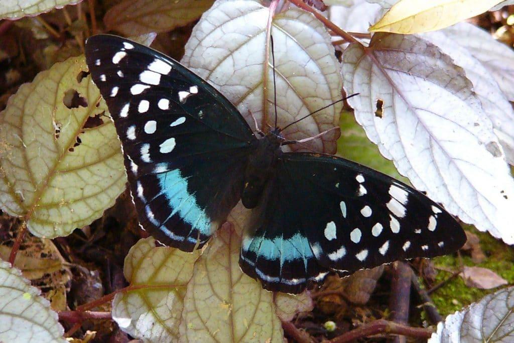 Butterfly ©  A. Siegert