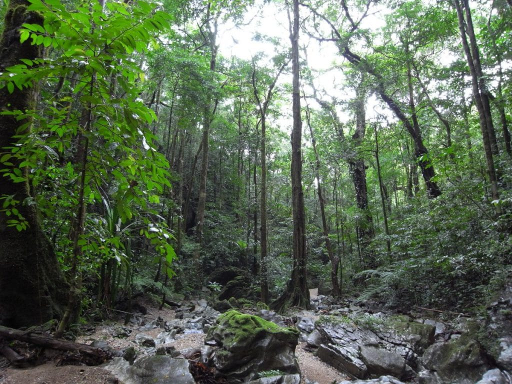 Read more about the article Reforestation