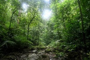 rainforest of the philippines on panay of the northwest panay penninsula natural park philincon by holly mynott