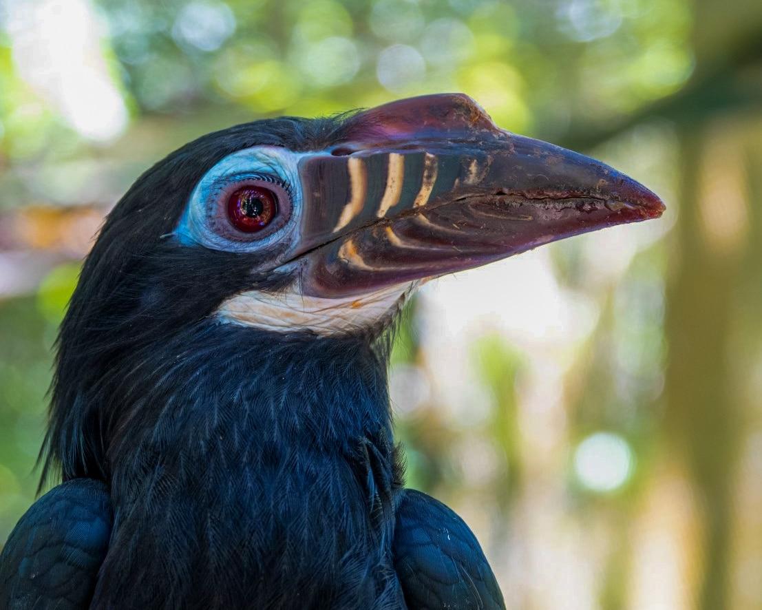 tarictic bird female patreon