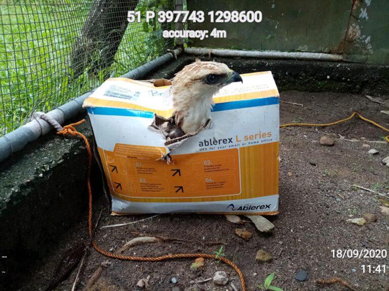 improvised box