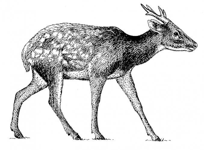 Deer1-min-min