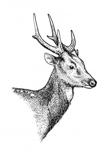 deer-min1-min