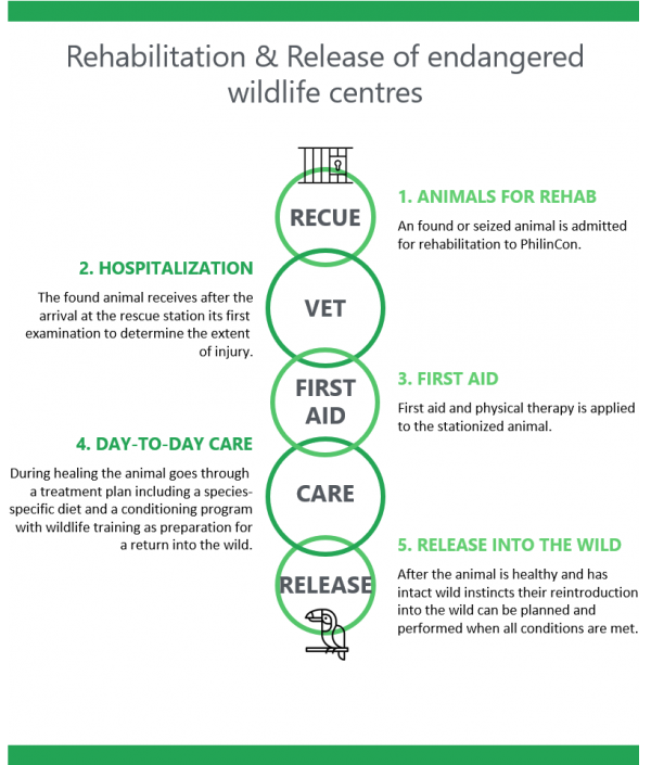 Philincon rehab and relese wildlife animals tropics nature conservation, found or seized animal admitted, injury determination, first aid, healing process, reintroduction into wild